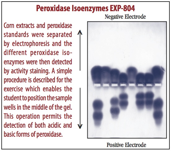 Peroxidase Isoenzymes in Corn