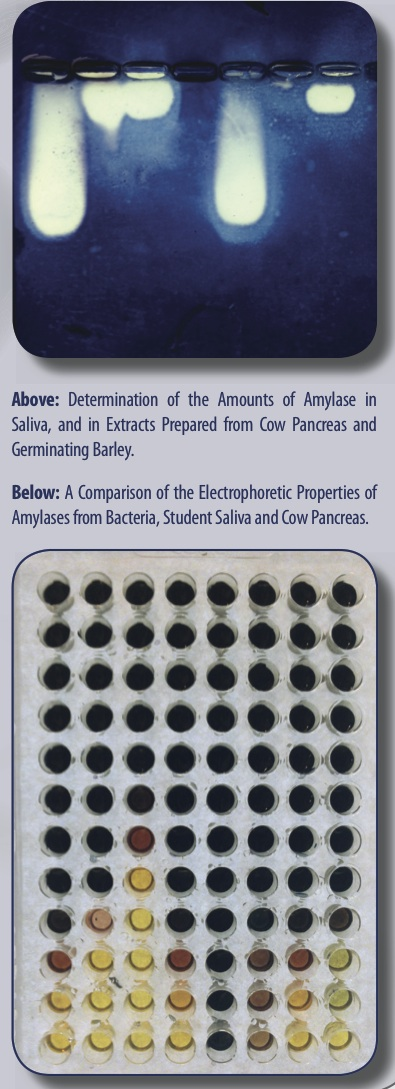 Laboratory Studies with Amylase (IND-31)