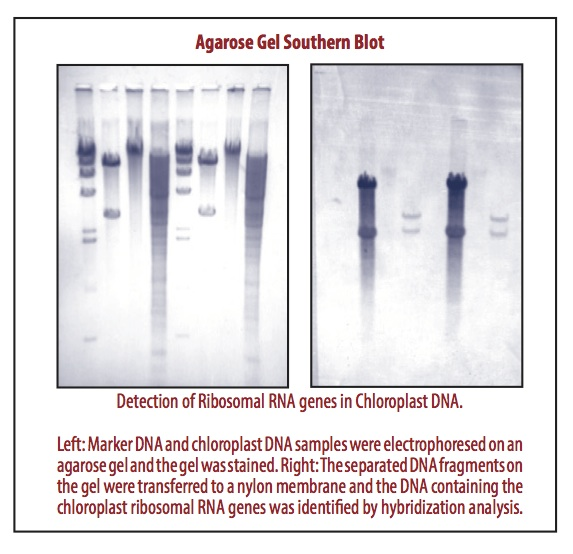 Plant Molecular Biology (S9)